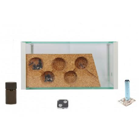 Kits AntHouse Corcho (Con Hormigas incluidas) Anthouse Kits Hormigueros