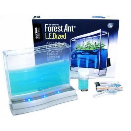 Hormiguero Antquarium Gel LUZ Y SEMILLAS (Hormigas incluidas Gratis) Anthouse Educativos para niños