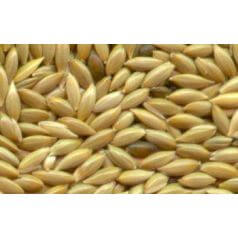 Canary Seed (50gr) Food Anthouse