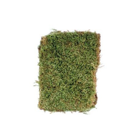 50g Dry Organic Moss Decorations Anthouse