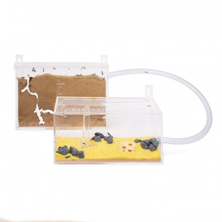 Kits AntHouse Pared Mini Acrilico Anthouse Kits Hormigueros