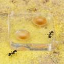 Kit AntHouse Wand Mini Acryl Kits Ameisennester Anthouse