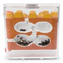 Kits AntCubik-Lite (Con Messor barbarus Gratis) Anthouse Kits Hormigueros