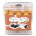 Kits AntCubik-Lite (Con Messor barbarus Gratis) Anthouse Kits Hormigueros