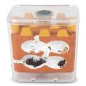 Kits AntCubik-Lite (Mit Messor barbarus gratis) Kits Ameisennester