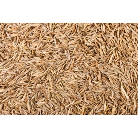 Rasen-Samen 25g Nahrung Anthouse