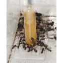 Bebedero de 3 ml para hormigas Anthouse Otros Accesorios