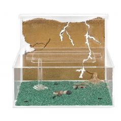 Sand Ant Farm L with Free Ants and Queen (Formicarium Educational) Ants nests Kits Anthouse