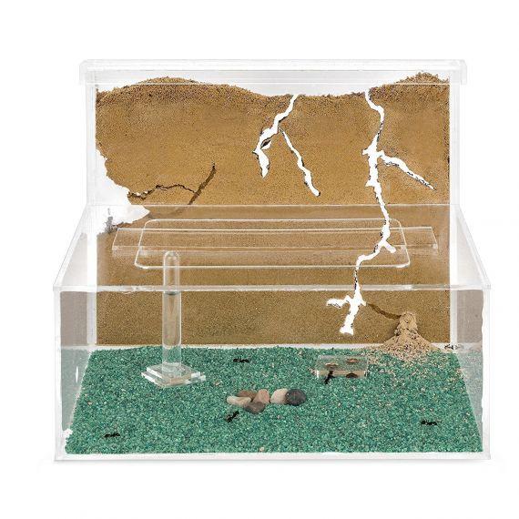 Kit AntHouse Basic Sand-Ameisennest mit Königin und Gratis-Ameisen