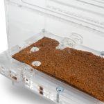 10x20x7cms Modular Mushroom foraging box Mushroom Modular Anthill