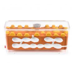 Anthouse-AntCubik-Mittel (Mit Deckel) Biorama-Typ Anthouse