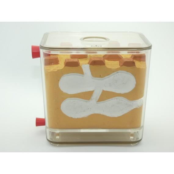 Anthouse-AntCubik-Lite(con Tapadera) Anthouse Tipo Biorama