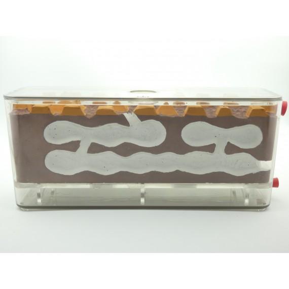 Anthouse-AntCubik-Medium (with lid) Biorama Ants nests Anthouse