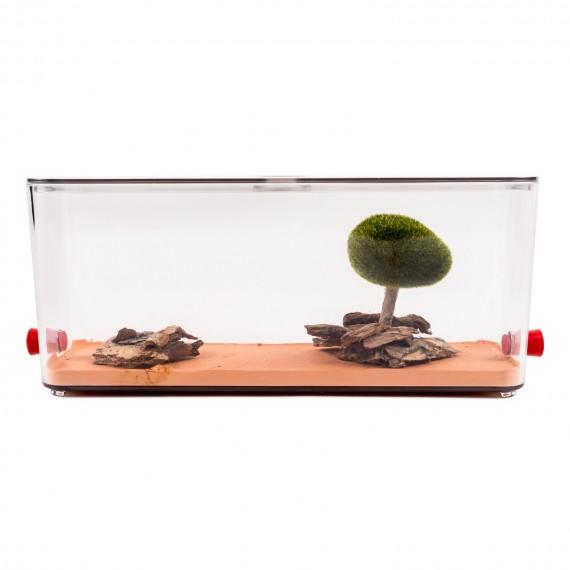 Anthouse - Caja de Forrajeo Decorada Anthouse Cajas de Forrajeo