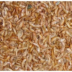 25 gr dehydrated Gammarus Food Anthouse