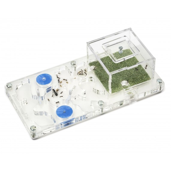 AntHouse-Hori-Acri 10x20x1,3cms Espuma (Con Caja de Forrajeo) Anthouse De Acrílico