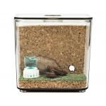 Kits Antcubik Corcho con Camponotus barbaricus Anthouse Kits Hormigueros