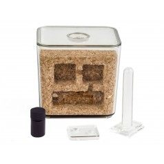 Antcork Lite - Cork Kit with Camponotus barbaricus Ants nests Kits Anthouse