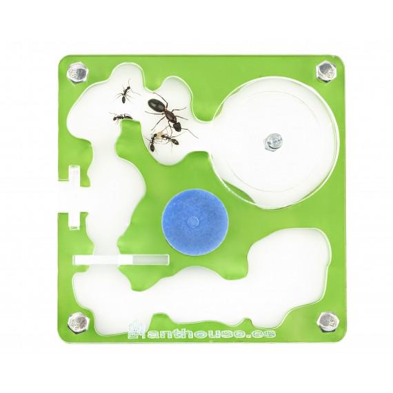 Acrilico NaturColor 10x10x1,3cms Espuma Anthouse  Hormigueros