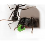 Feeder 3D - Seedbed for granivorous ants Other accessories Anthouse