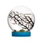 Aquatic ecosystem - Marine Biosphere (prawns included) OUTLET Anthouse