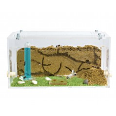 Anthouse Acrylic Starter Kit Ants nests Kits Anthouse