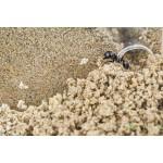 Anthouse Acrylic Starter Kit Ants nests Kits Anthouse