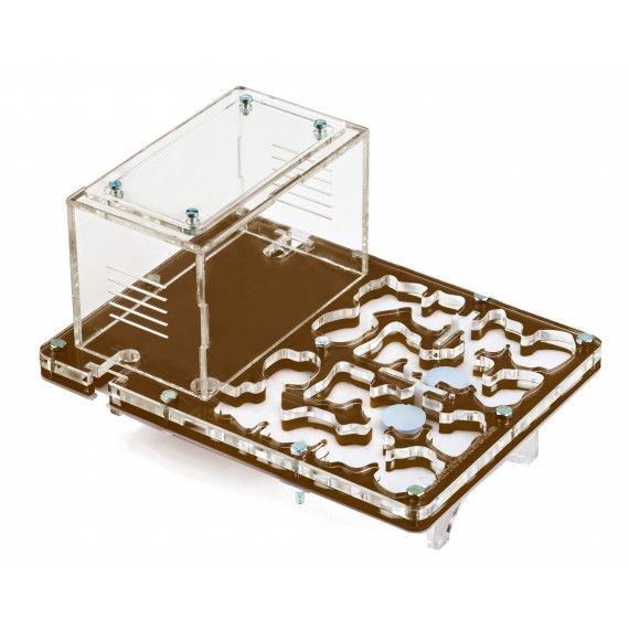 Acrylic NaturColor 20x15x1,5cms Mushroom Ant's Nests Anthouse