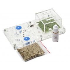 Kit Educativo PVA 10x20x1,3 cm (Hormigas con Reina incluida Gratis) Anthouse  Hormigueros