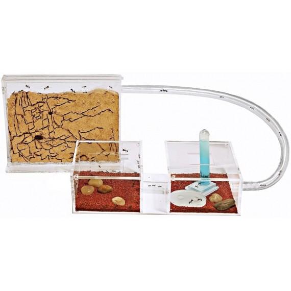 AntHouse Sandwich-Acri/Mini Kit Ants nests Kits Anthouse