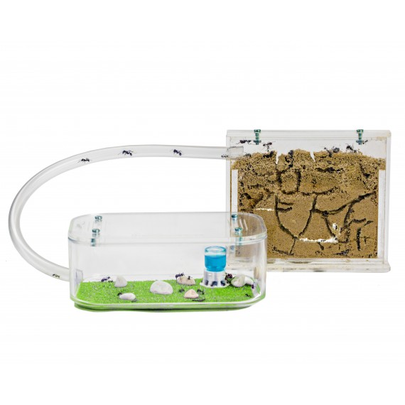 Ant Farm Basic with free Ants and Queen - Educational formicarium for LIVE ants Ants nests Kits Anthouse