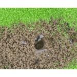 Acrylic Model T Kit (15x15x1.5) Ants nests Kits Anthouse