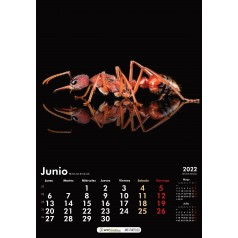 Calendrier des fourmis 2022