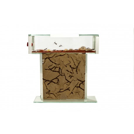 Anthouse - T Kit Glass (15x15x1.5) Ants nests Kits Anthouse