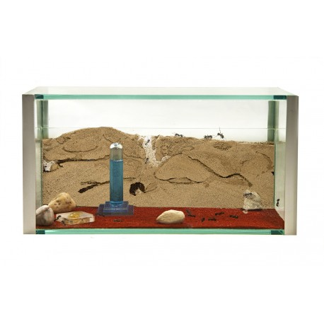 AntHouse Starter Kit Glass Ants nests Kits Anthouse