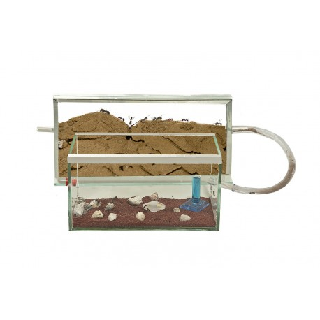 Anthouse Deluxe Kit Ants nests Kits Anthouse