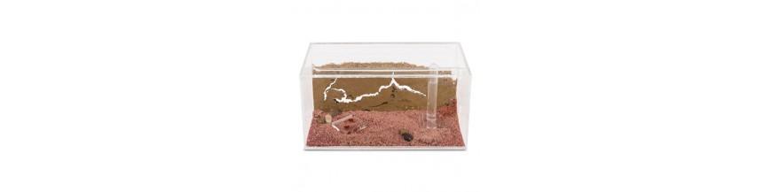 Kit nidi per formiche
