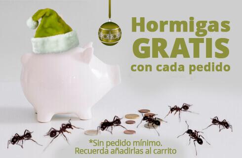 Hormigas gratis con cada pedido
