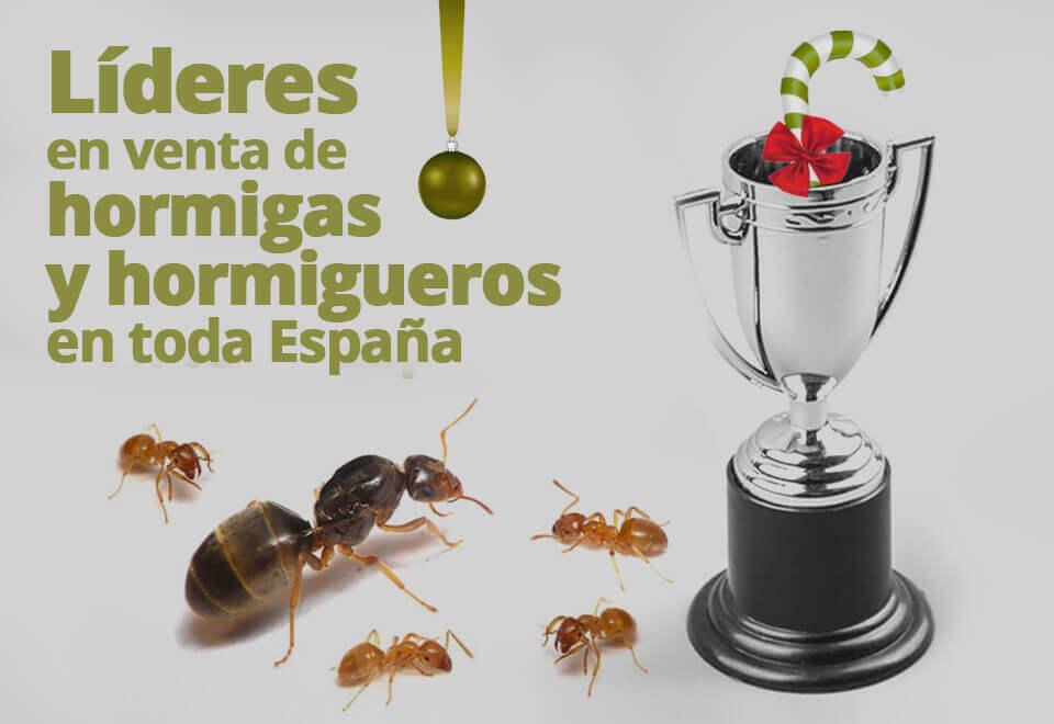 Líderes en venta de hormigas